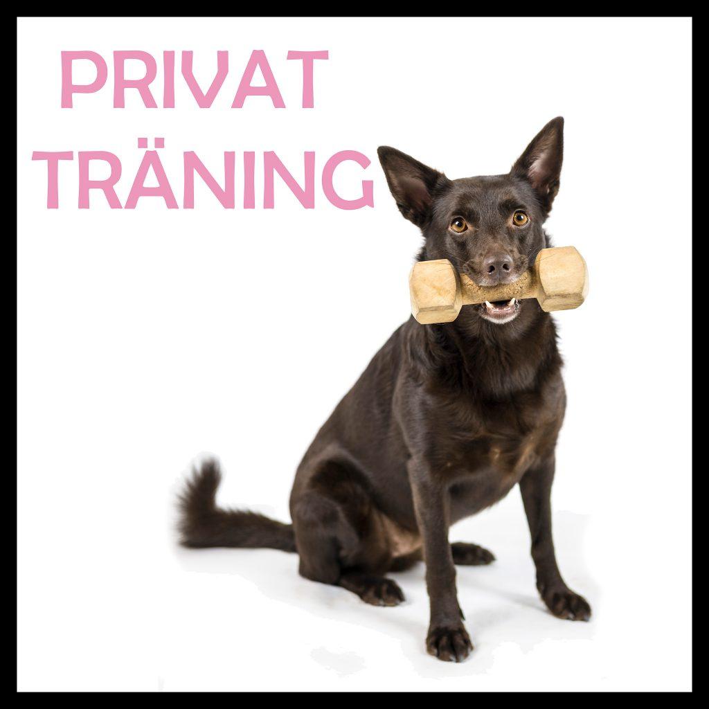hundträning privatlektion tävling