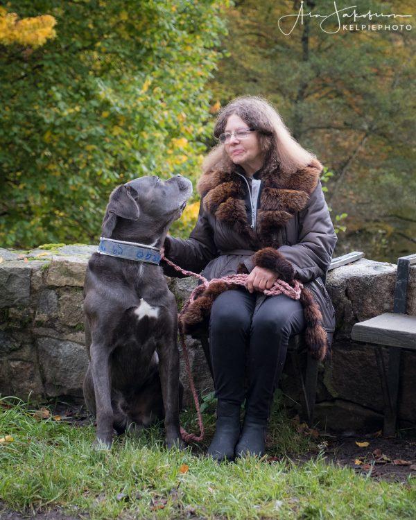 Hund och människa sitter och tittar på varandra i samarbete och glädje, vardagslydnad. Cane corso